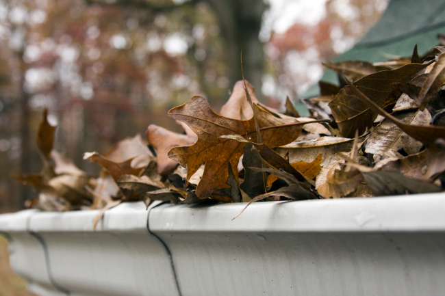 8 Reasons Why You Need a Leaf Guard